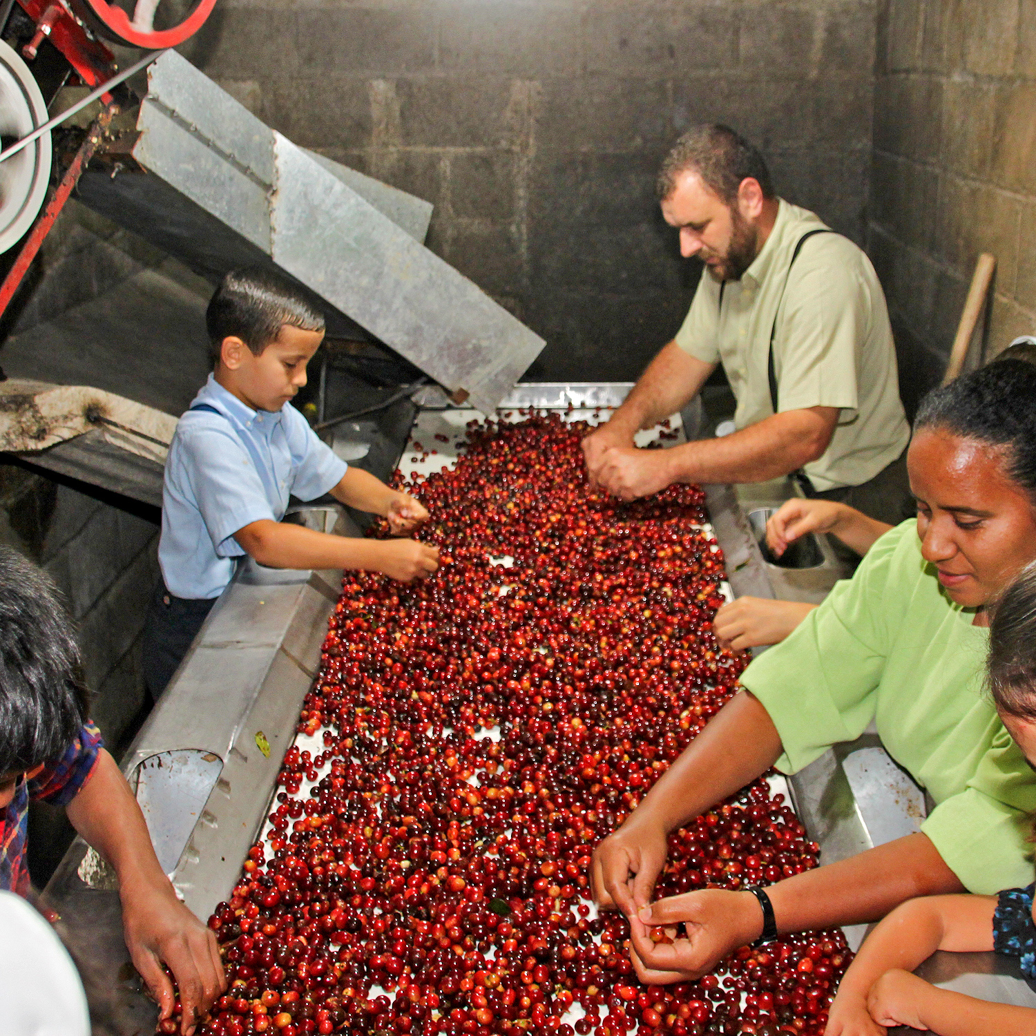 sorting coffee for southern pecan flavored coffee