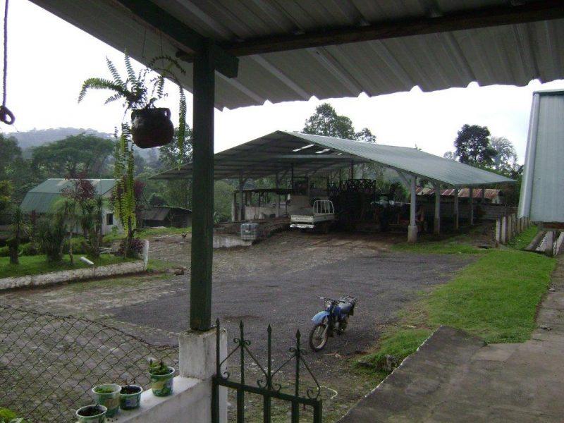 coffee farm producing honduras coffee