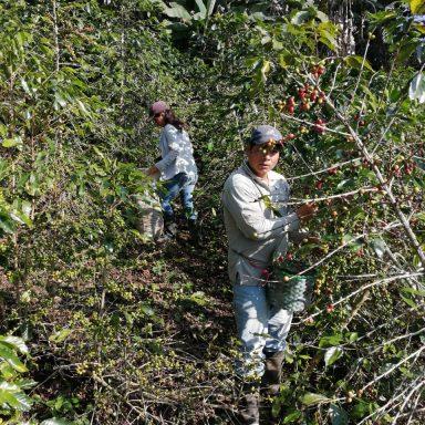 hondurian coffee farmers