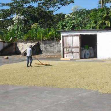 stirring the drying coffee