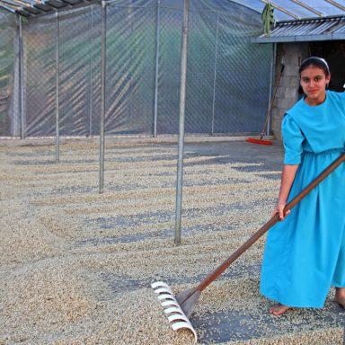 8 Elisa Showalter Joels gathering predried coffee 2019 coffee harvest in honduras