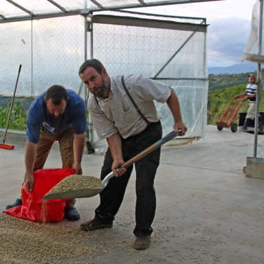 10 filling sacks with predried coffee 2019 coffee harvest in honduras