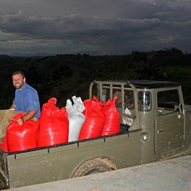 11 hauling predried coffee to dryer 2019 coffee harvest in honduras