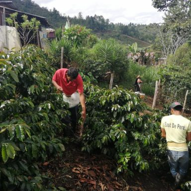 honduras central american coffee planters