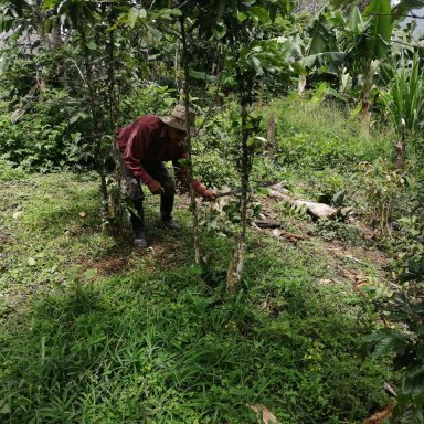 honduras coffee farmers august 2020