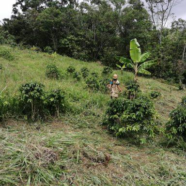 honduras coffee farmers fair trade