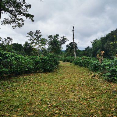honduras coffee farmers working august 2020