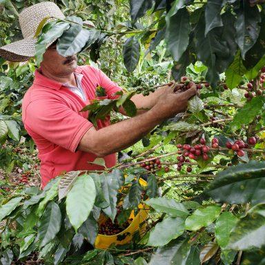 columbia coffee farm to cup