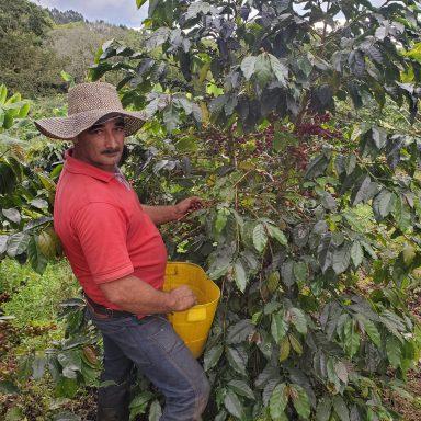 columbian coffee fair trade