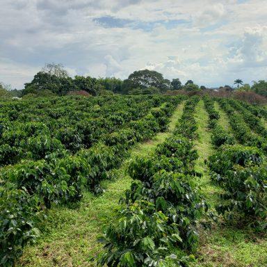 columbian highlands direct trade coffee