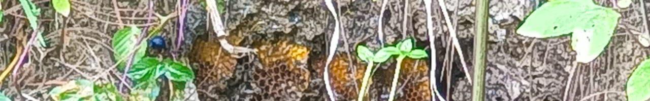 bee hive in honduras