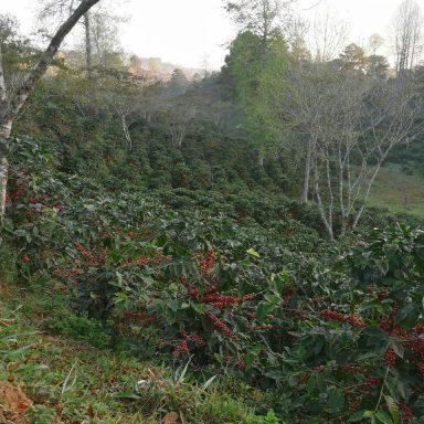 honduras countryside direct trade coffee
