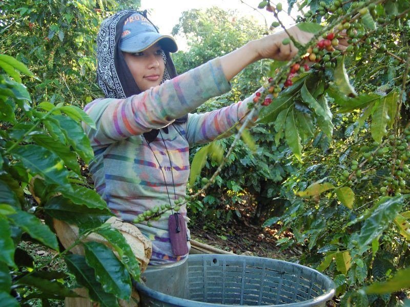 direct trade coffee from costa rica