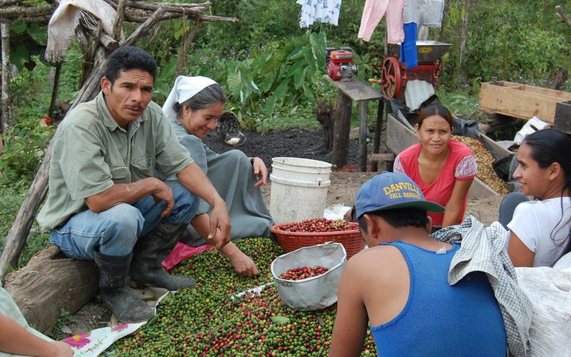 sustainable coffee from central america