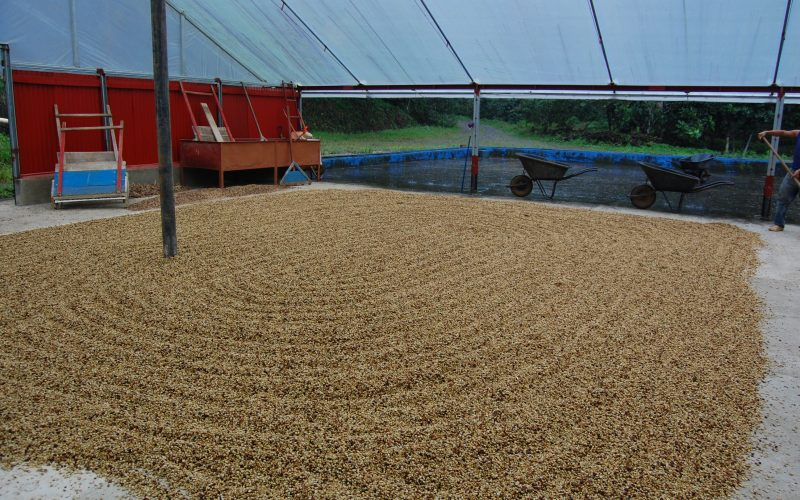12 farm to cup coffee drying coffee