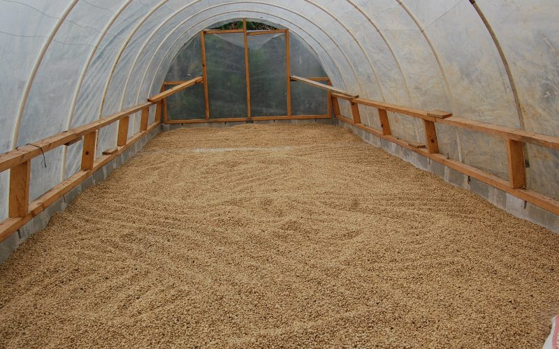 12a farm to cup coffee drying