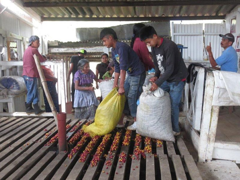 direct trade coffee growers in guatemala 1